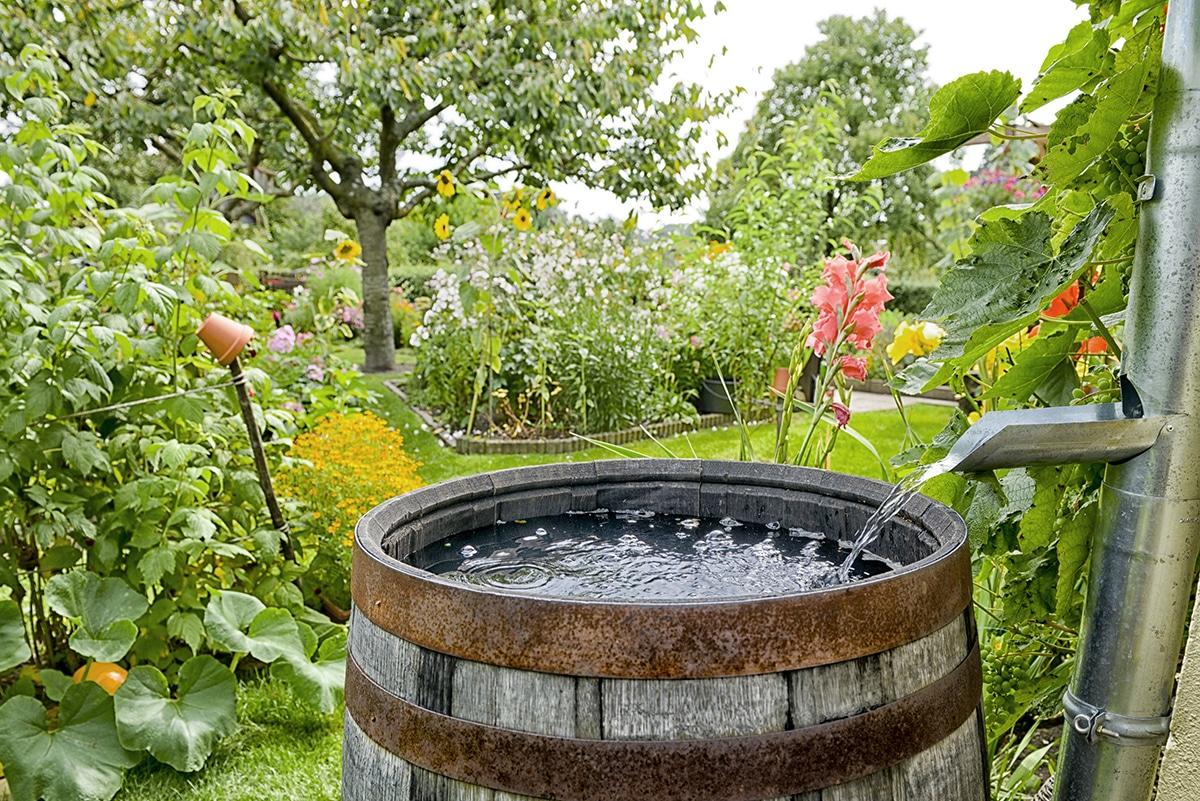 Comment aménager son jardin eau de pluie